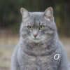 Кошачий мир на одесской Трассе здоровья (фоторепортаж)