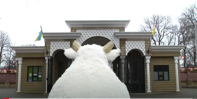 Год Быка: в Одесском зоопарке выпустили музыкальный клип в честь символа 2021 года (видео)