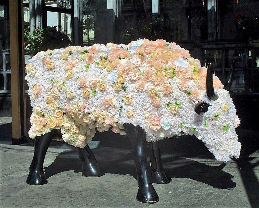 корова ромина одесса