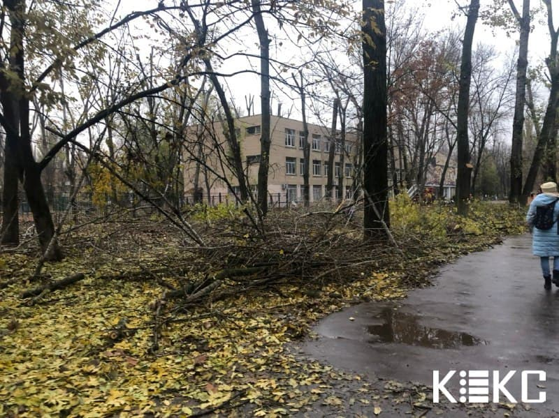 деревья возле школы на Варненской