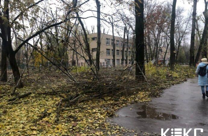 Одесские коммунальщики уродливо обкорнали деревья возле школы на Варненской (фото)