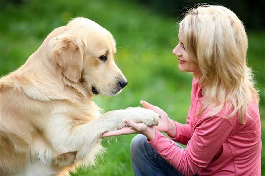 домашние животные лечат