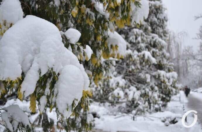 На Одессу надвигается снегопад