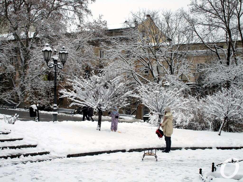 зима в центре Одессы,ь деревья