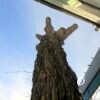 Главные события Одессы 14 января: ледяная угроза и печальная участь легендарного дерева