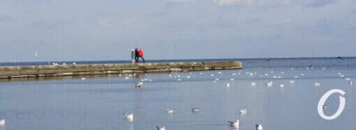 Солнечный январь: прогулка вдоль одесского побережья (фоторепортаж)