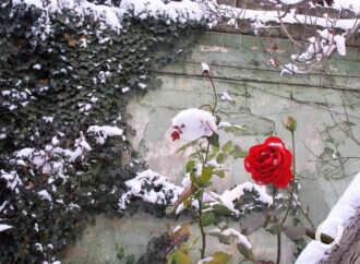Природа творит чудеса в одесских дворах (фотофакт)