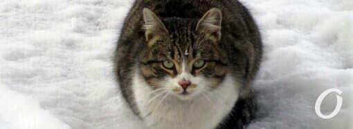 Хозяева зимних одесских улиц: «кошачья» фотоподборка (фото)