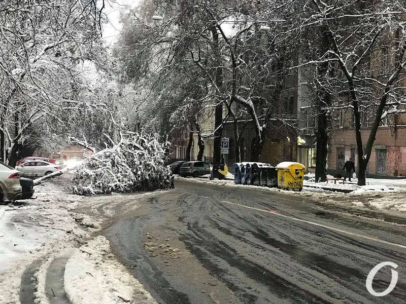 деревопад в Одессе, дорога