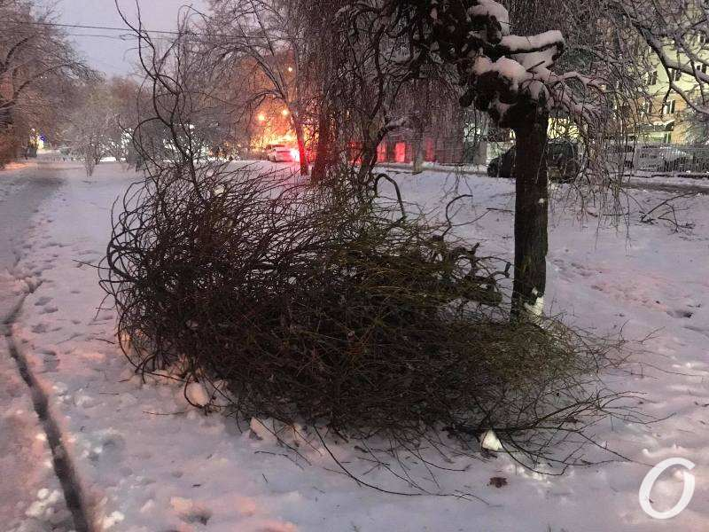 деревопад в Одессе