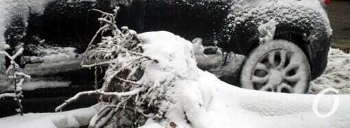 Погода в Одессе 6 февраля: быть ли снегопаду?