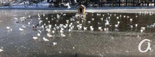 Пруды в одесском парке Победы затянуло льдом (фото)