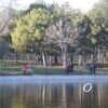 Аномально теплый январь в Одессе вывел сотни людей на прогулку в парк Победы (фоторепортаж)