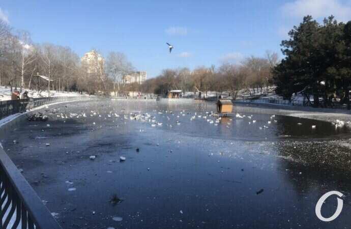 Импровизированный каток в одесском парке едва не погубил ребенка (видео)