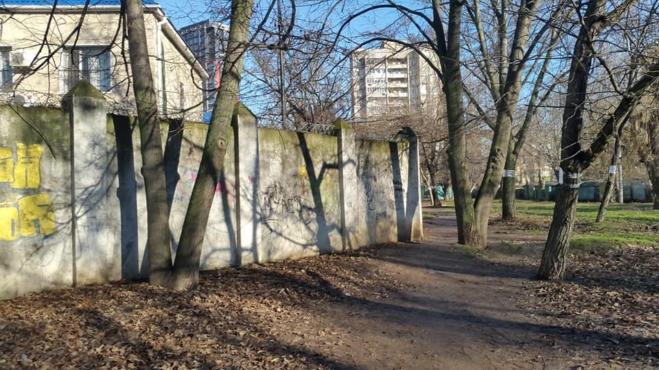 деревья возле Киевского суда в Одессе