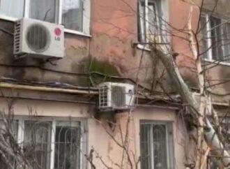 Деревопад в Одессе: тополь выбил окна многоэтажки на Балковской (видео, фото)