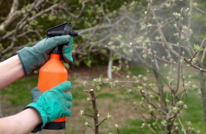 Надійні інсектициди, які допоможуть зберегти врожай