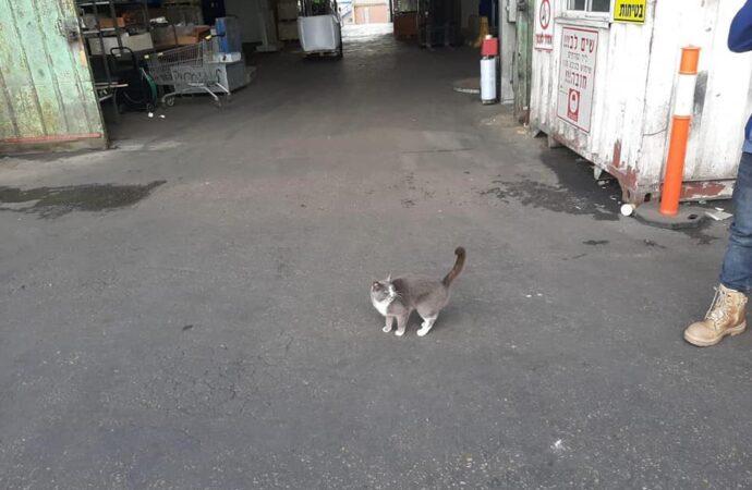 Одесская кошка пережила 3-недельный «круиз» в Израиль в контейнере с конфетами (фото)