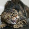 В Одессе зафиксировали бешенство у кошки – идет расследование