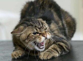 Отомстила за царапину: одесситка жестоко расправилась с домашним котом