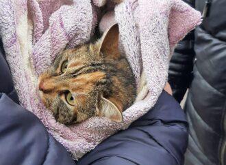 Операция «Кошка»: одесситы спасли усатую «экстремалку», 3 дня просидевшую на дереве (видео)