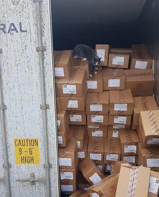 Одесская кошка прибыла в Израиль в контейнере
