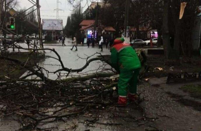 В Одессе непогода: падают деревья и не ходит «камышовый трамвай»