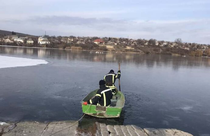 Под Одессой спасли из ледяного плена стаю лебедей