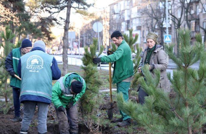 Рождественский подарок: в Одессе высадили 400 сосен