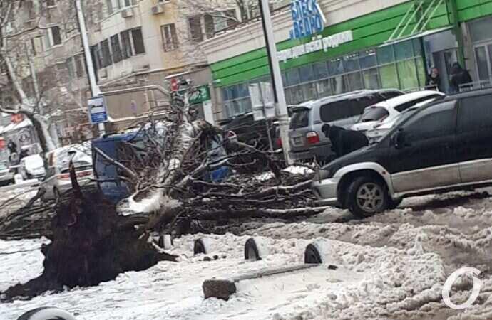 В Одессе дерево упало на авто и перекрыло дорогу (видео)