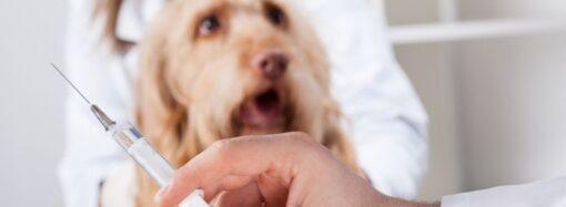 В Одессе будут бесплатно вакцинировать от бешенства домашних животных