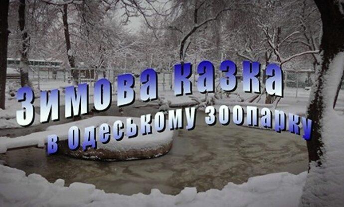 В Одесском зоопарке – зимняя сказка (видео)