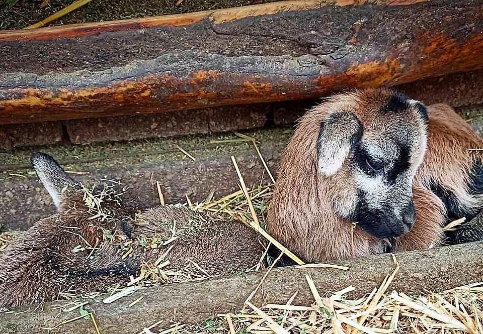 Одесский зоопарк, пополнение