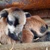 В одесском зоопарке появились первые детеныши 2021 года (фото)