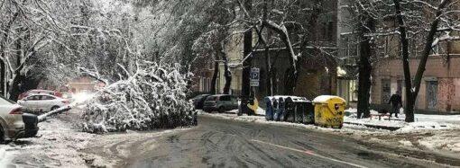 Кто и когда уберет упавшие деревья с одесских улиц?