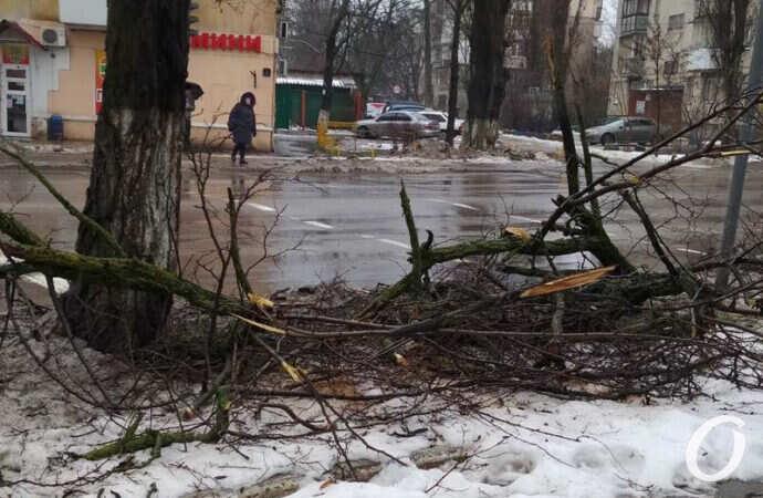 Где же «Горзелентрест»: улицы Одессы до сих пор завалены опавшими ветками (фото)