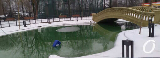 Зима в Одесском зоопарке (фоторепортаж)
