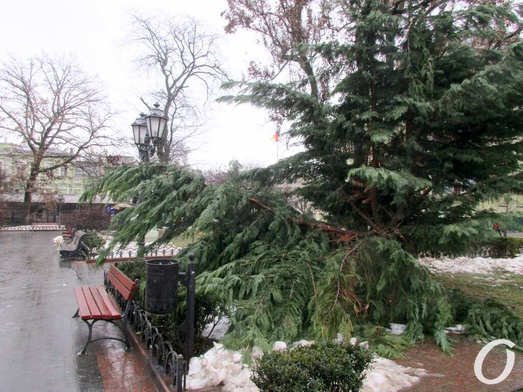 Горсад, сломанные деревья