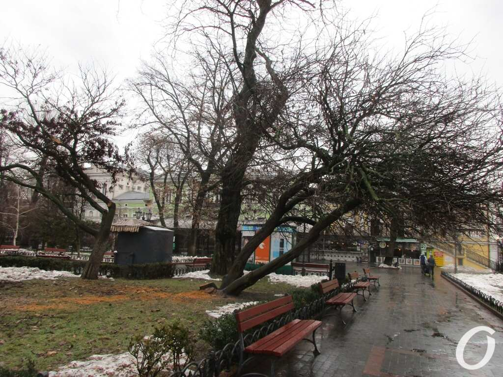 Горсад, Иудино дерево