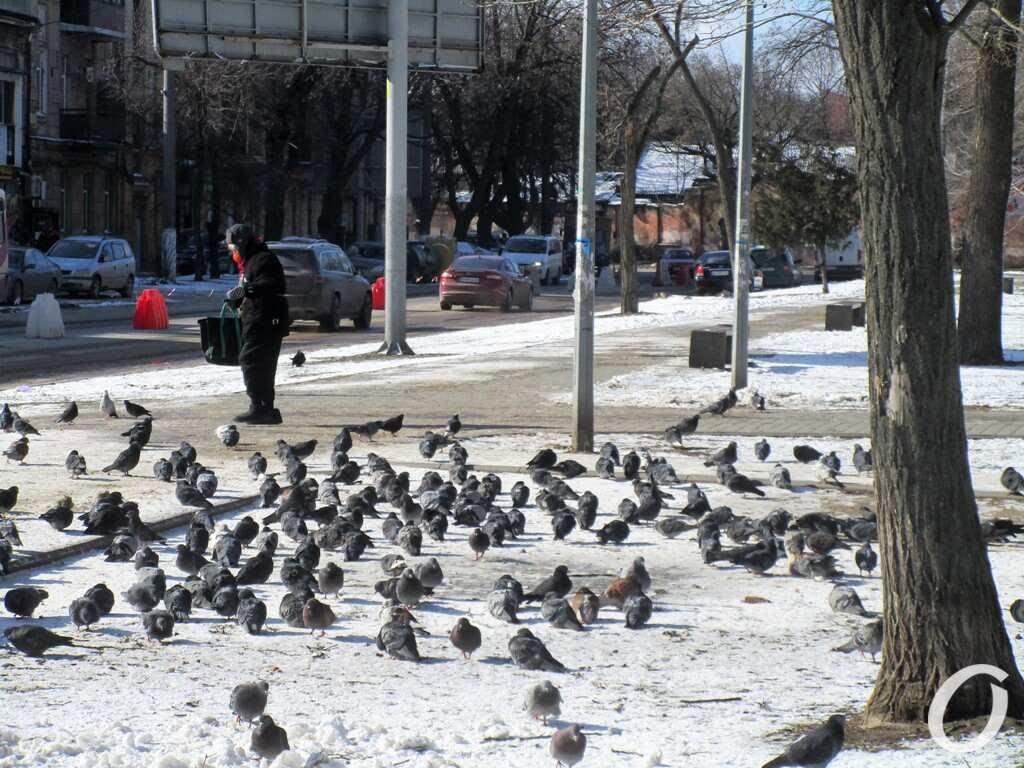 Старосенной сквер, голуби