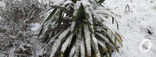 Погода в Одессе 17 февраля: морозы не отступят