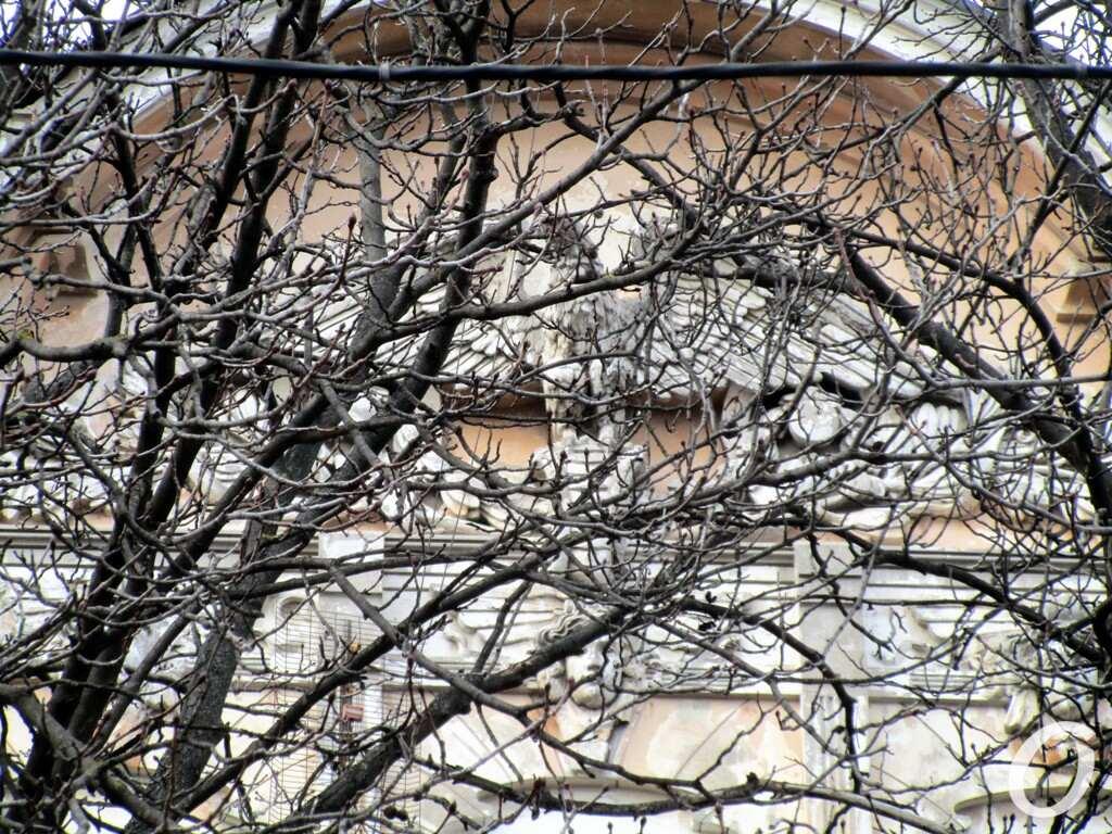 Дом с орлом-гигантом, дерево