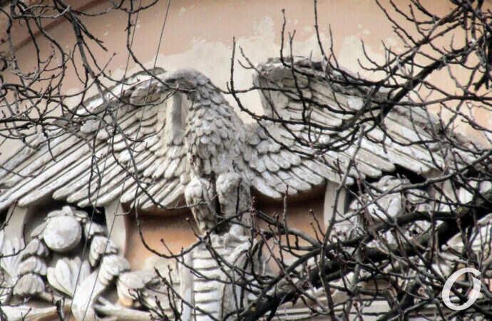 Одесский дом с орлом-гигантом – чем примечателен и где искать? (фото)