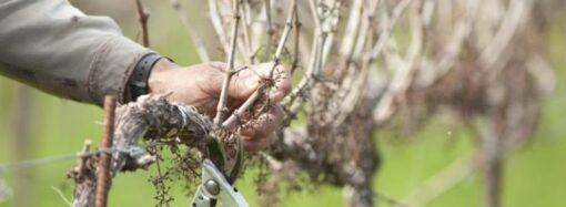 Дачные советы: конец февраля – идеальное время для обработки ягодных культур, обрезки сада и виноградников