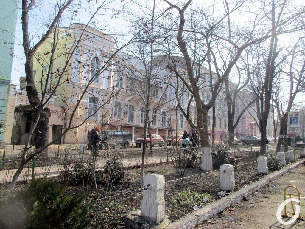 Одесский сквер, деревья