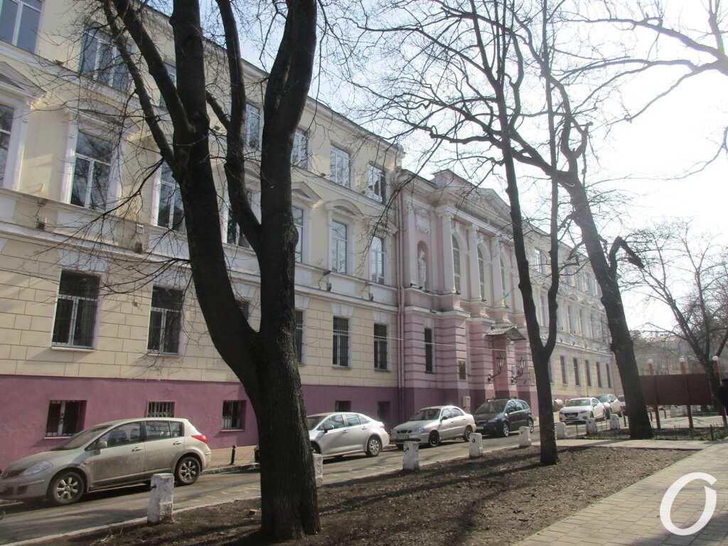 Одесский сквер, дерево