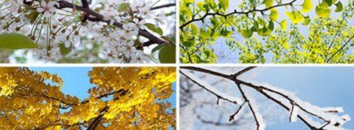 Погода весной: когда придет тепло в Украину?