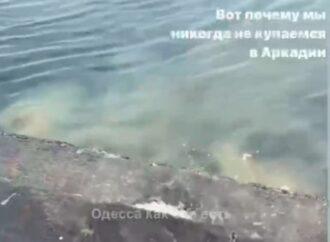 В Аркадии на плитах сливают в море нечистоты – опубликовано видео (видео)