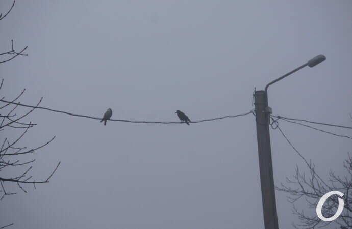 Одессу накрыл густой туман — фото