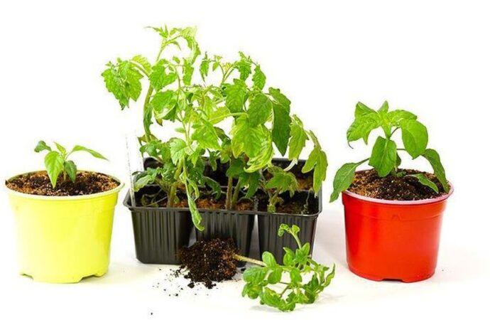 Дачные советы: посев семян на рассаду